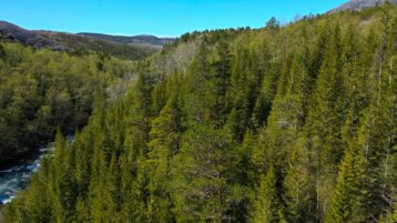 Free stock footage: Flying over a green spring forest