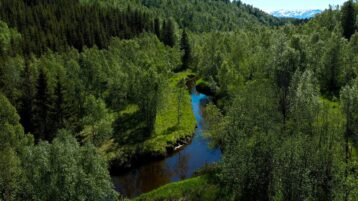 Free stock footage: River and forest on a summer day