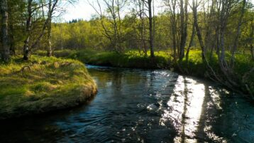 Free stock footage River flowing in the spring forest