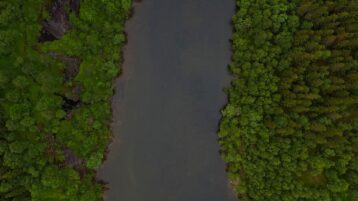 Free stock footage: River in the forest seen from above