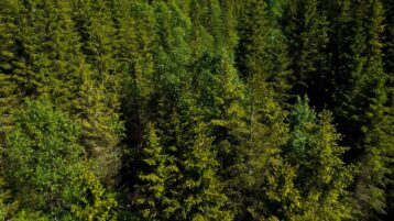 Free stock footage pack: Aerial view of green forests