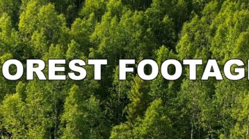 Free forest stock footage