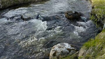 Free log stock footage: Closeup view of a small river