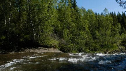 Free log stock footage: Green trees and a river flowing