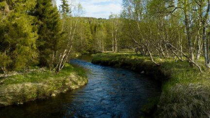 Free log stock footage: River flowing in the spring forest