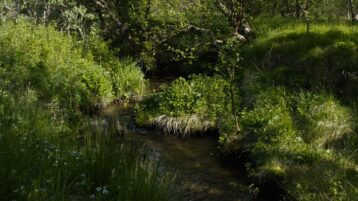 Free log stock footage: Small stream in the spring forest