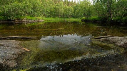 Free stock footage: Calm river flowing in the forest