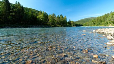 Free stock footage: Clear river in the green summer forest