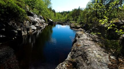 Free stock footage: Dark deep pool in the summer forest