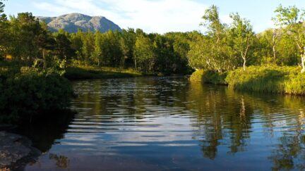 Free stock footage: Evening sun by a river in the summer forest