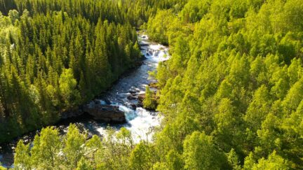 Free stock footage: Flying along a river in the green forest