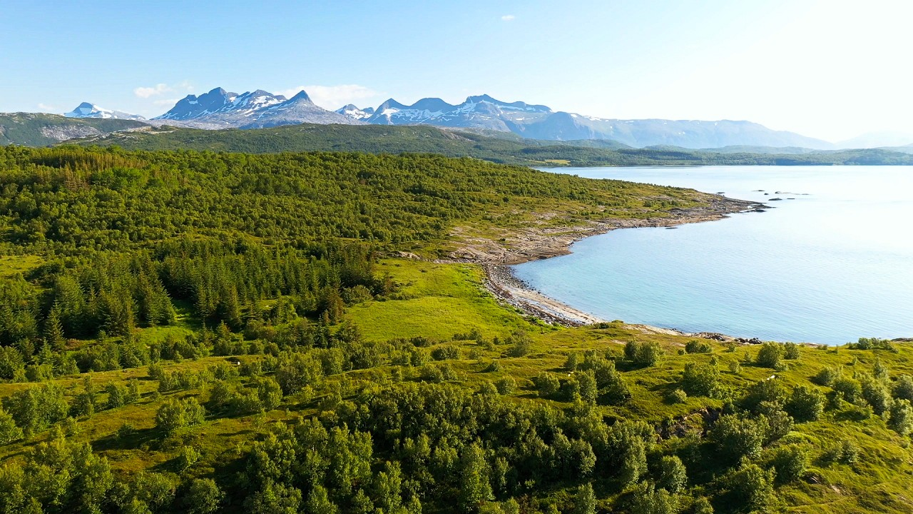 Free stock footage: Flying over a forest by the coastline