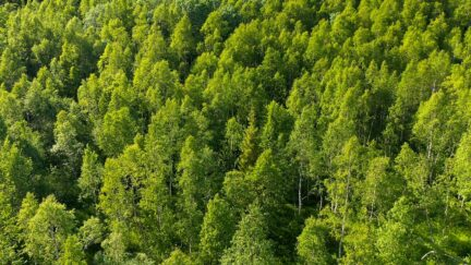 Free stock footage: Flying over a green forest on a summer day