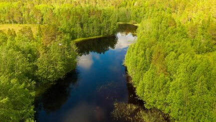 Free stock footage: Flying over a river in the green summer forest
