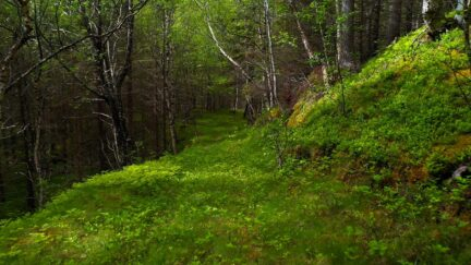 Free stock footage: Hiking in the green forest on a sunny day