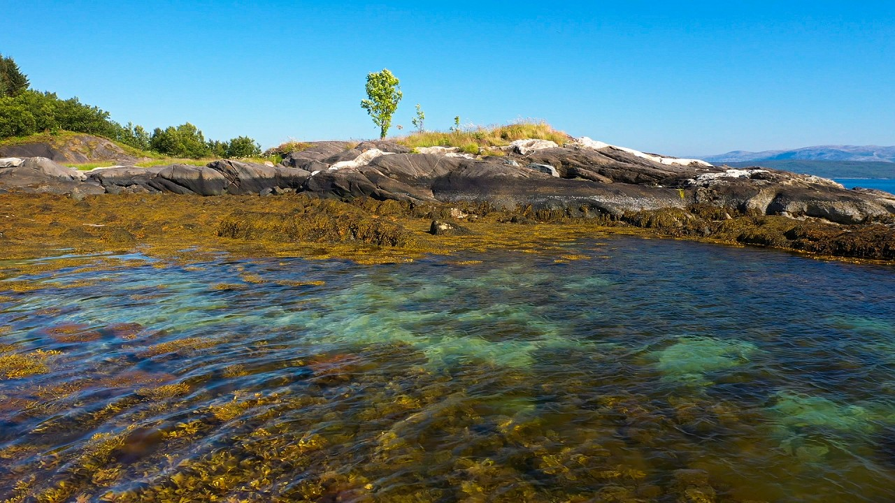 Free stock footage: Low tide on a sunny summer day