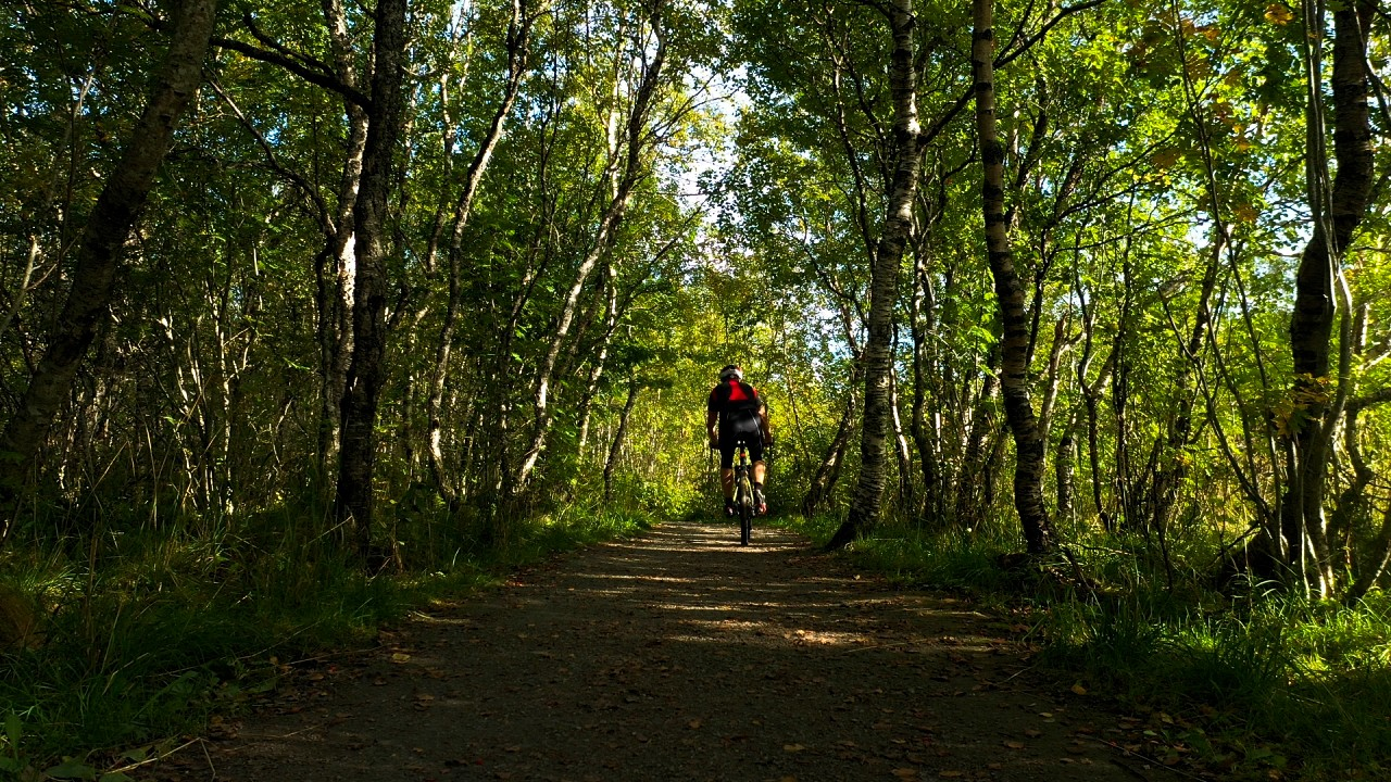 Free stock footage: Man biking on a path in the forest