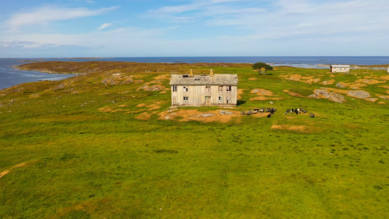 Free stock footage: Old house and a flock of sheep