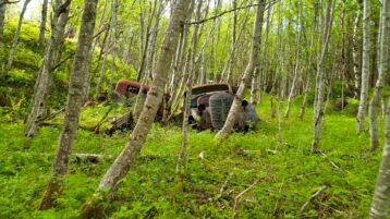 Free stock footage: Old rusty car wrecks in the green spring forest