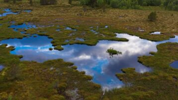 Free stock footage pack: Aerial view of a bog on a cloudy day