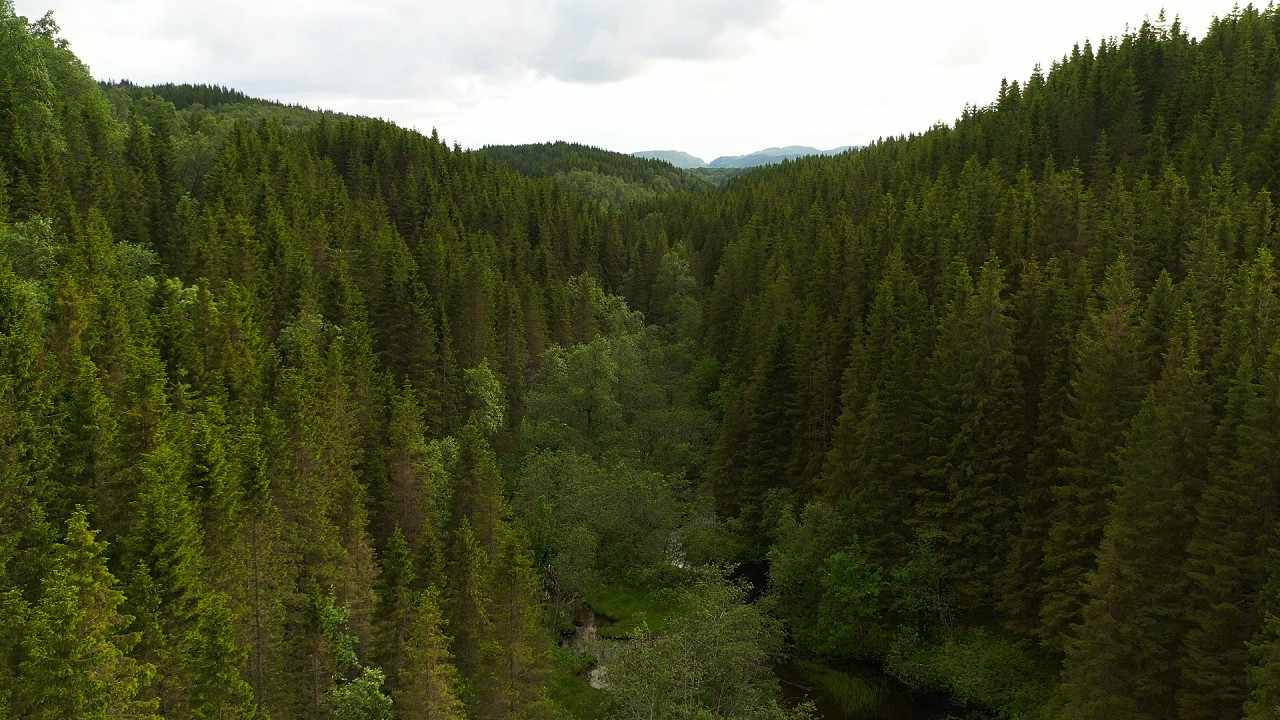 Free stock footage pack: Aerial view of green forests on a cloudy day