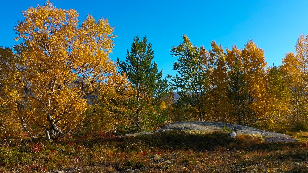 Free stock footage pack: Wind blowing in the autumn trees