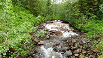 Free stock footage: River and waterfalls in the forest