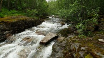 Free stock footage: River flowing down the wet green forest