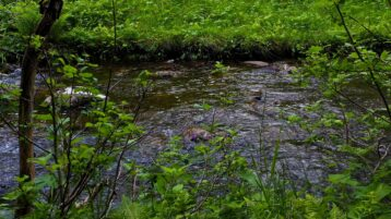 Free stock footage: River flowing in the green forest