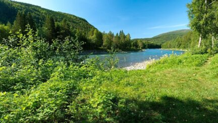 Free stock footage: River in the forest on a summer day
