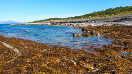 Free stock footage: Seaweeds in a bay during low tide