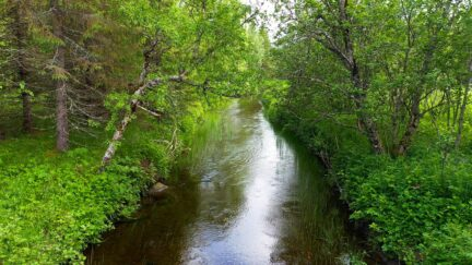 Free stock footage: Shallow river in the green summer forest
