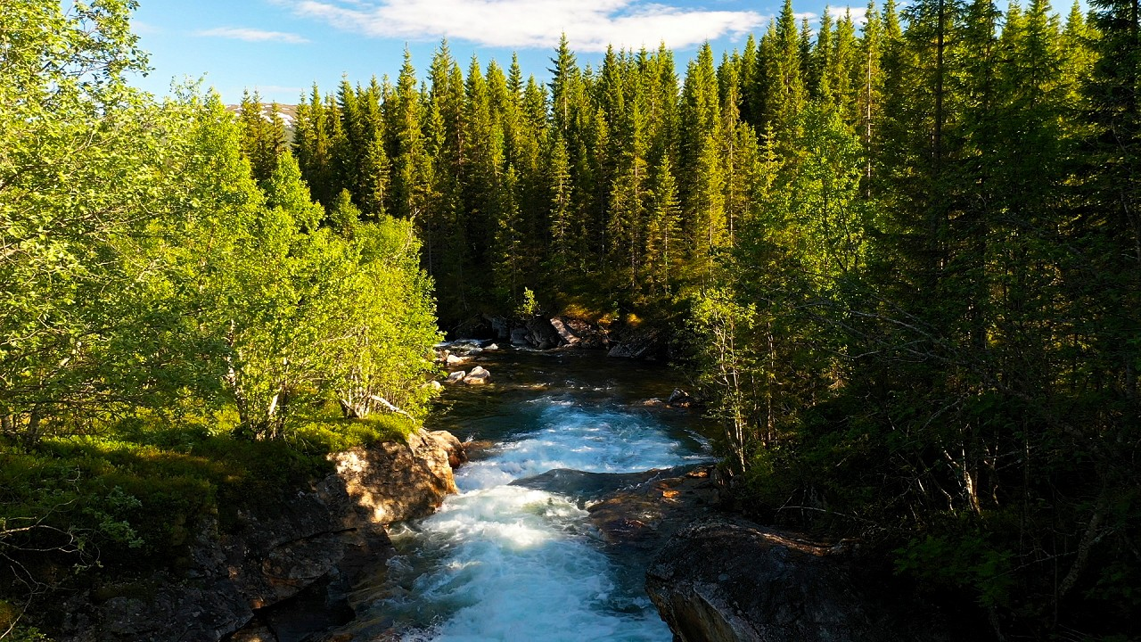 Free stock footage: Strong river flowing down the green forest