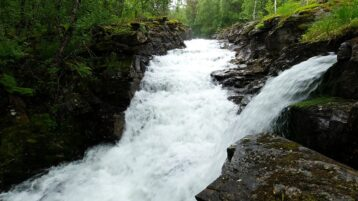 Free stock footage: Strong river in the wet green forest