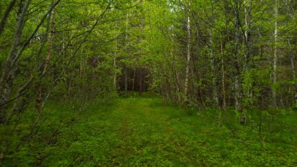 Free stock footage: Walking in the dense green spring forest