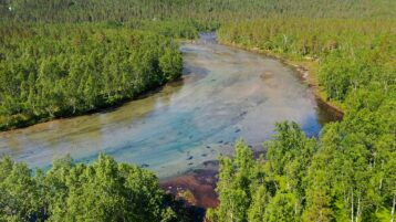 Free stock footage: Wide river in the green forest