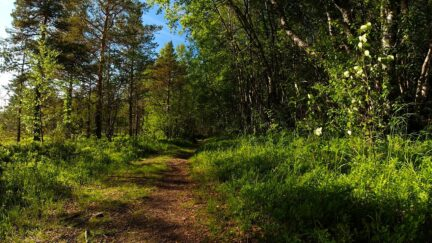 Free stock footage: Wind blowing in the summer forest