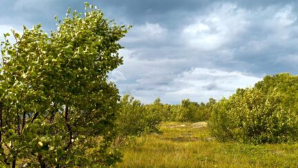 Free stock footage: Wind in the trees on a cloudy day
