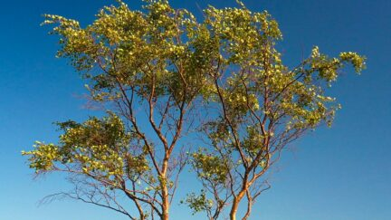 Free stock footage: Wind rustling the leaves on a tree